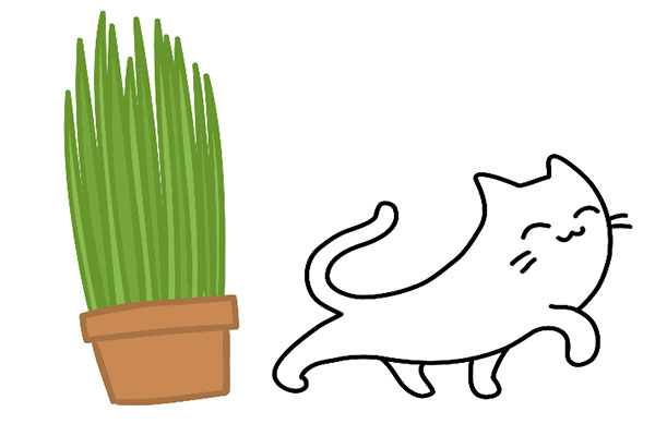 Buy Cat Grass