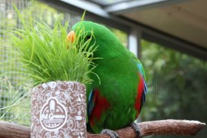 Birds love Pet Grass