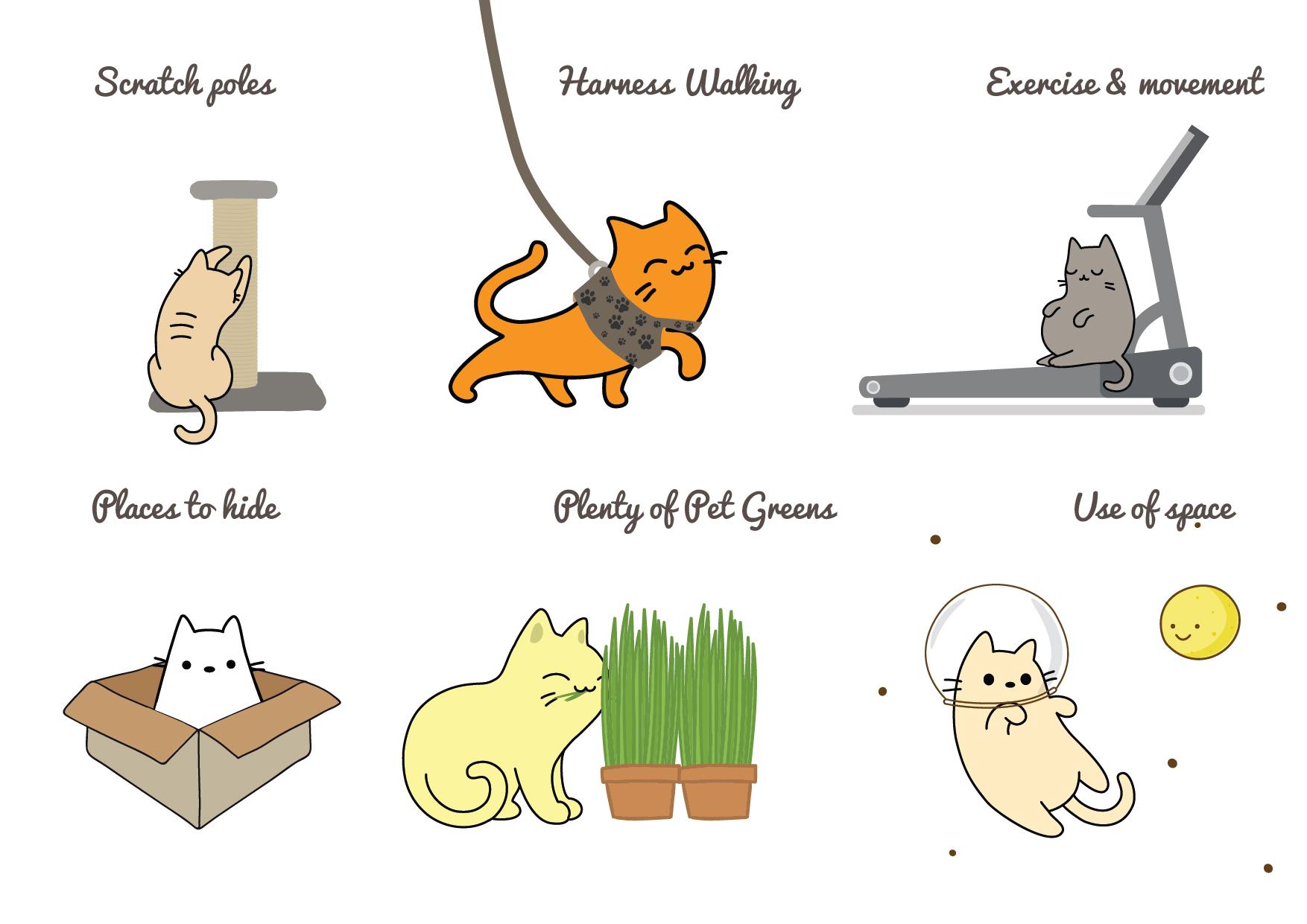 Top Tips by Dr Katrina Warren to keep your indoor cat happy